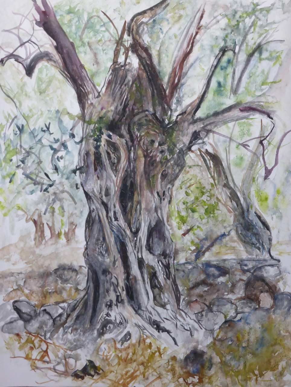 elies - olivier sous la pluie - Lesbos