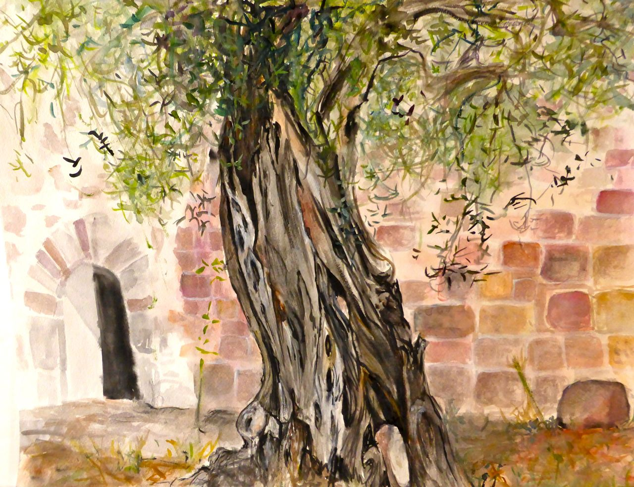 olivo davanti a San Pietro